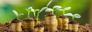 lotus-digital-blog-three-steps-to-grow-your-business